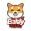 Baby Shiba