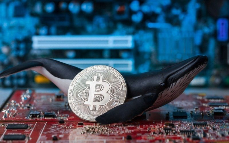 giá bitcoin: Peter Schiff: Cá voi là lí do khiến Bitcoin tăng hơn 30% so với Vàng