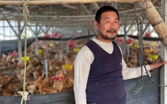 giá bitcoin: Lợn chết chuyển sang nuôi gà, nông dân Trung Quốc vẫn 'méo mặt' vì thua lỗ