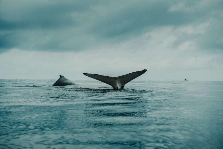 """giá bitcoin: Nhà đầu tư lâu năm của Coinbase """"lại"""" bắt đầu tham gia cá mập tích trữ Ethereum"""