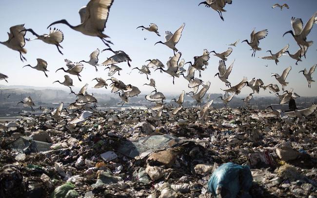 giá bitcoin: 2 tỷ tấn rác thải và bài toán đau đầu ám ảnh các nước giàu